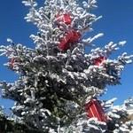 Un arbre vers le ciel chargé de cadeaux